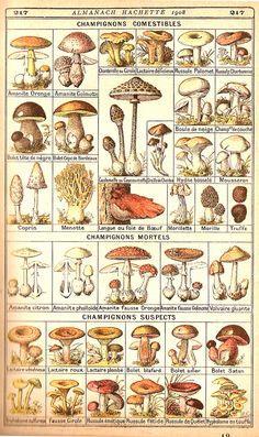 Mushrooms/Cogumelos Identificação http://www.drapc.min-agricultura.pt/base/documentos/guia_de_campo_cogumelos_silvestres.pdf