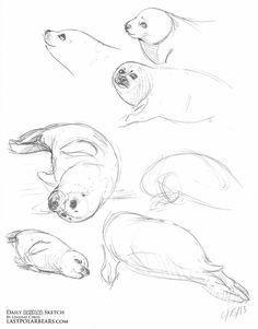 Cute Animal Drawings, Animal Sketches, Art Drawings Sketches, Cute Drawings, Sea Creatures Drawing, Bear Sketch, Posca Art, Drawn Art, Nature Sketch