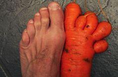 foto 4 - nov-2012. Lista reúne vegetais em formatos curiosos. Em 2010, o britânico Stuart Boulton encontrou uma cenoura em formato de pé, com cinco dedos, na plantação que tem em casa, na cidade de Darlington, na Inglaterra. Foto: Reprodução.