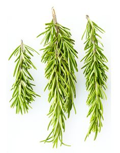 Herb Guide: Growing Rosemary - directions for drying and storing and making rosemary sugar
