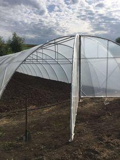 Solarii legume profesionale la preturi avantajoase de la Folie Solar