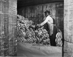 An African-American laborer for the B&O unloads bananas at the B&O's Locust Point fruit pier. The Locust Point operation prepped refrigerator cars and loaded barges that traveled to Pier 1 located in Baltimore's Inner Harbor (known as the basin and pier 1 is the current location for the USS Constellation).