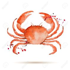 Resultado de imagen de cangrejo acuarela