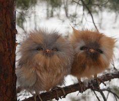 Stuffed Owlets