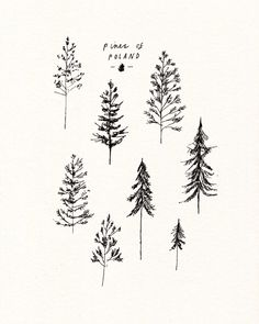 Ideas For Evergreen Tree Tattoo Small Simple Pine Tattoo, Cute Tattoos, Small Tattoos, Fox Tattoos, Compass Tattoo, Kiefer Tattoo, Simple Tree Tattoo, Tree Line Tattoo, Tree Drawing Simple