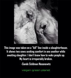 This way of life for these animals is so unnecessary. Plant foods are the highest nutrient dense foods on the planet.