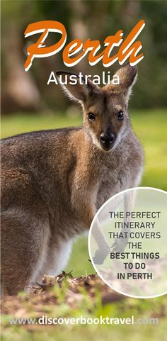 The perfect itinerary for travelling to Perth, Western Australia that covers the best things to do in Perth.  Discover the city sights and the most beautiful places and beaches in Perth that are perfect for photography.  Save this pin and click to read more.   #discoverbooktravel #perth #perthitinerary #perththingstodo #australiatravel #australia #perthtravel #westernaustralia