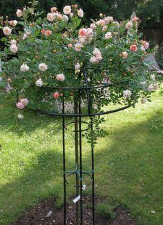 Vertical Rose Gardening Giverny Rose Umbrella, from Classic Garden Elements. Rose Trellis, Garden Trellis, Landscaping With Fountains, Garden Landscaping, Dream Garden, Garden Art, Rose Garden Design, Classic Garden, Garden Structures