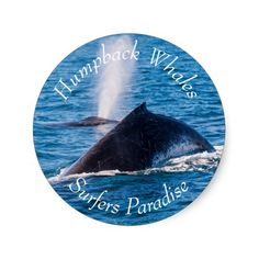 Cool sticker featuring a pair of Humpback Whales taking a breather on the surface during their annual migration off the eastern coast of Australia.