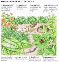 Empleo natural de insectos y pájaros en la defensa ecologica de tu huerto