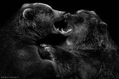 Photo baerentanz par Wolf Ademeit on 500px