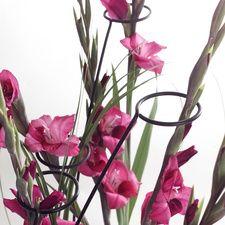 #Gladiolen #Inspiration #BBH und #Heyl