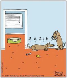 Dog growth chart