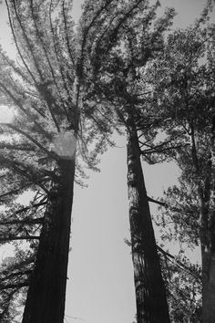 B&W Trees  by KISSINDREgrace