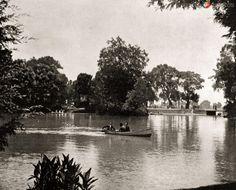Bosque de Chapultepec: Lago