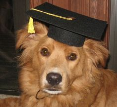 Just got one of these handmade caps for my dog and love it :) very well made. #pets #graduation