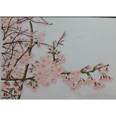 【copichakkai0921】さんのInstagramをピンしています。 《#コピック #桜 #イラスト #花》