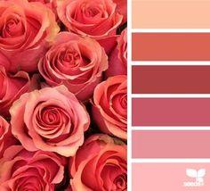 Zinnia brights | design seeds | Bloglovin'