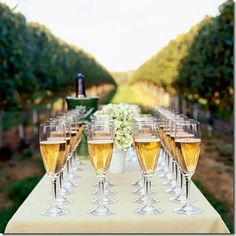 How about Champagne Friday in the Champagne region? Bon Weekend!!!!!!!