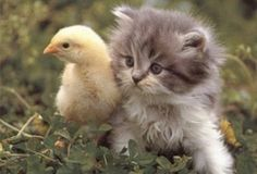Animales domésticos 2