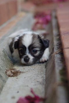 Aww tiny puppy! Someone needs to pick it up and give it some lovin':) ha