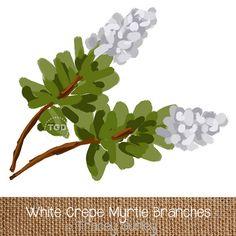 White Crepe Myrtle Art, Digital Download, Crape Myrtle Clip Art, Crepe Myrtle Clip Art, Tree graphic, Tree clip art TraceyGurleyDesigns, $2.00