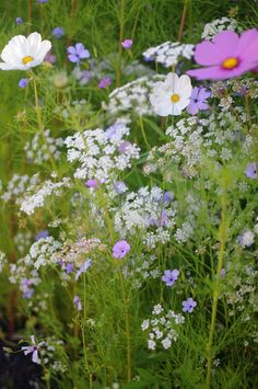 "Ethereal Wildflowers: Cosmos, Queen Anne's Lace and Agrostemma (Corn Cockle). ""Tips for Planting Wildflowers"" article and pretty photo courtesy of craftsy.com."