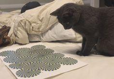 Pogledajte reakciju mačke na optičku iluziju! VIDEO