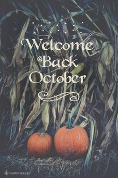 Ideas for photography autumn hello october Fall Halloween, Happy Halloween, Halloween Quotes, Halloween Games, Autumn Cozy, Autumn Fall, Fall Wallpaper, Fall Pictures, Samhain