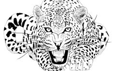jaguar animal roar drawing
