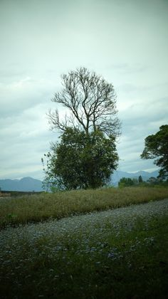 Photo Sharing Sites, Dehradun, Site Hosting, Research Institute, Galleries, Country Roads, Plants, Photography, Image
