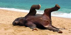 The massive mammal was caught on camera trying out some unusual poses (© Caters News Agency)