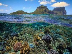 A new species of hard coral from the World Heritage-listed Lord Howe Island, Australia Australia Flights, Australia Tourism, Airlie Beach, Broome Western Australia, South Australia, Hard Coral, City Of Adelaide, Tourism Marketing, Lord