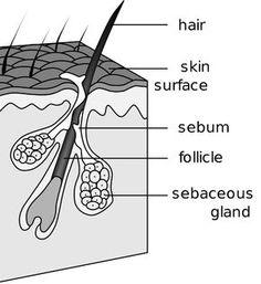 56 Best Hair Scalp Remedies Images Hair Scalp Home Remedies Remedies