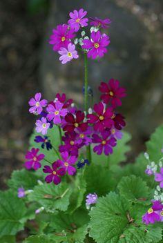 Gorgeous Beautiful Wild Flower Garden https://gardenmagz.com/beautiful-wild-flower-garden/