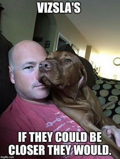 Oh so true! Just like Weimaraners Vizsla Dog Breed, Wirehaired Vizsla, Vizsla Puppies, Weimaraner, Dog Breeds, Dogs And Puppies, Doberman, Funny Animal Pictures, Funny Animals