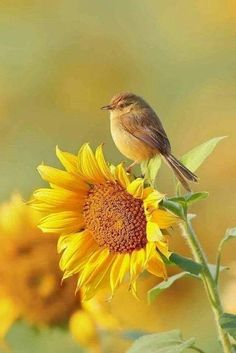 10 Beautiful plants to attract wild birds to your garden Sunflower Pictures, Bird Pictures, Nature Pictures, Pictures Of Flowers, Color Pictures, Cute Birds, Pretty Birds, Beautiful Creatures, Animals Beautiful