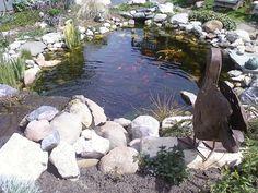 my pond :)