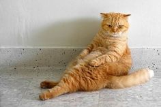Paws for thought: The hilarious cats who think they're human We are a nation of cat lovers who love nothing more than doting on our feline friends. Funny Cats, Funny Animals, Cute Animals, Grumpy Cat Disney, Neko, Exotic Cats, Cats Musical, Angry Cat, Owning A Cat