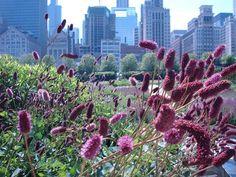 Prairie Garden, Millenium Park, Chicago