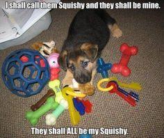 http://www.catchdogtrainers.com/