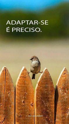 #resiliência