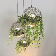 Geodesic Terrariums from Atelier Schroeter – Victorian glass house meets space age oxygen farm in these striking new light features....
