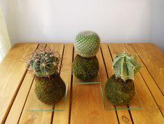 Kokecactus