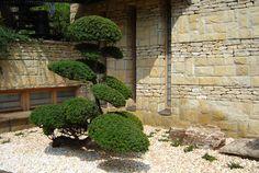 Kertépítés, füvesítés, tóépítés, kerti világítás | Pro Natura Kert