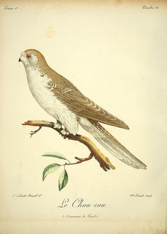 n245_w1150 by BioDivLibrary, via Flickr