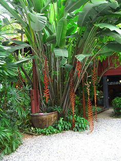 Small Japanese Garden Design with a Pond Small Tropical Gardens, Tropical Garden Design, Japanese Garden Design, Tropical Landscaping, Tropical Plants, Garden Landscaping, Palm Plants, Bali Garden, Balinese Garden