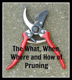 Check out some basic tips on what to prune when to prune and how to prune. ~gardenmatter.com
