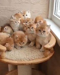 Funny Cute Cats, Cute Baby Cats, Cute Kittens, Cute Cats And Kittens, Cute Little Animals, Baby Dogs, Cute Funny Animals, Cute Dogs, Ragdoll Kittens