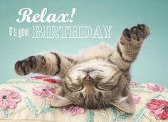 It's Your Birthday - Happy Birthday Funny - Funny Birthday meme - - Relax! It's Your Birthday The post Relax! It's Your Birthday appeared first on Gag Dad. Happy Birthday Pictures, Happy Birthday Messages, Happy Birthday Funny, Happy Birthday Quotes, Cat Birthday, Happy Birthday Greetings, Animal Birthday, It's Your Birthday, Birthday Memes